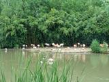 Au parc des oiseaux de Villars les Dombes