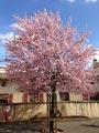 Le printemps à Saint-Nicolas